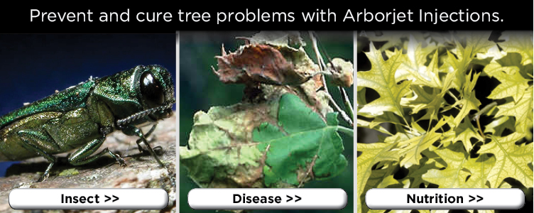 prevent and cure tree problems with arborjet